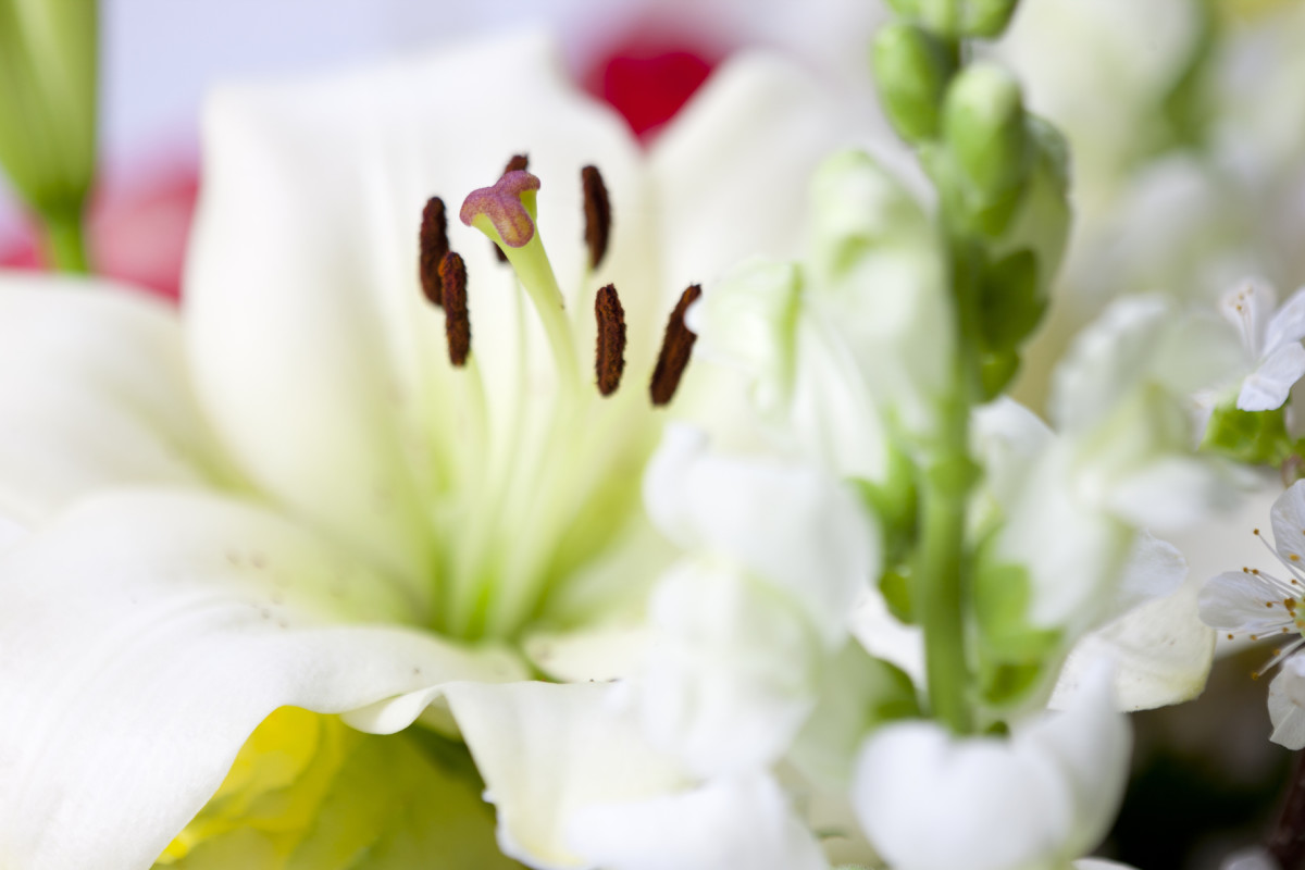 This article will cover a handful of different types of lilies and provide information on how to grow them.