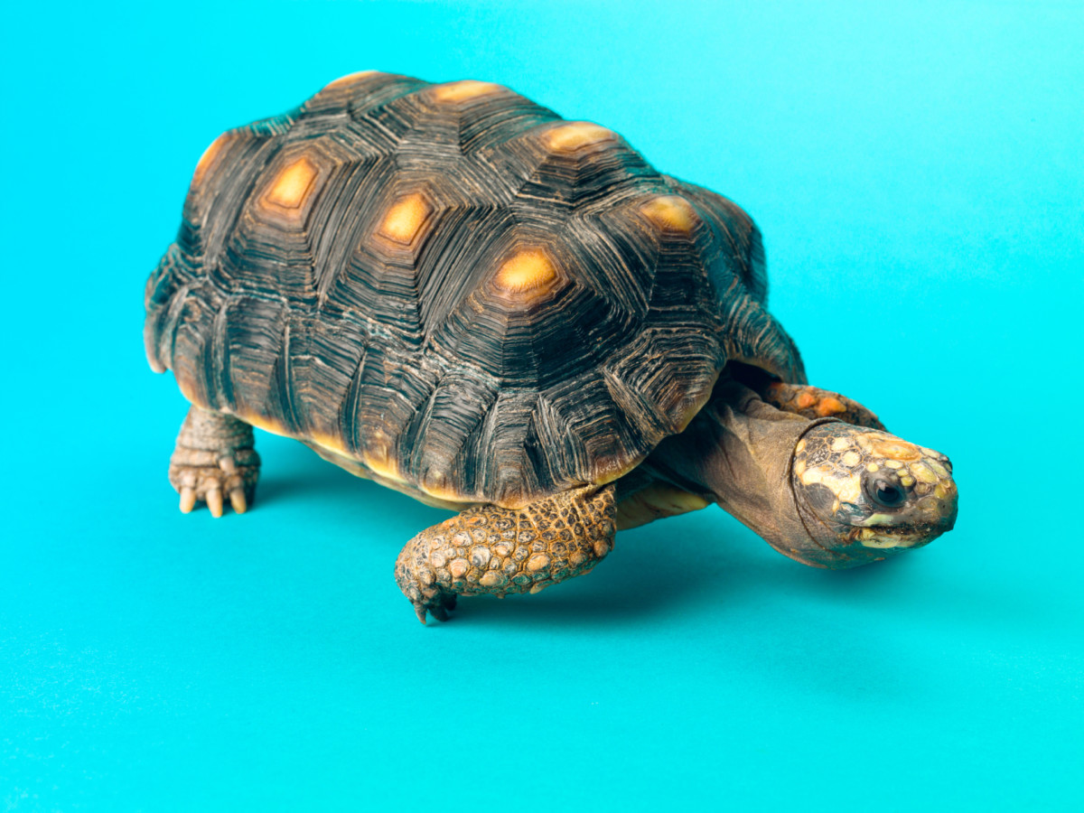 Each turtle is unique—does your pet's name reflect its personality?