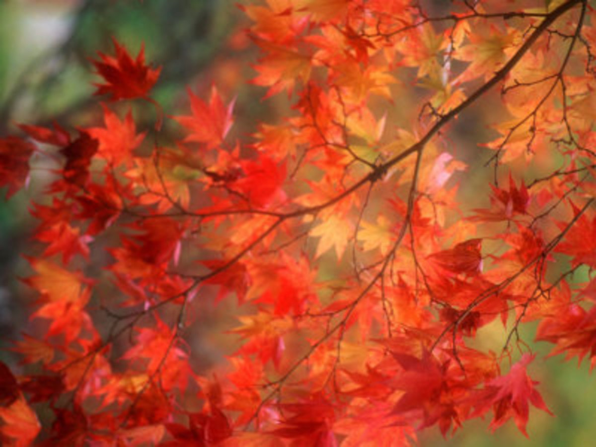 Poster captures the beauty of fall leaves. Eventually they fall and needed to be removed from a lawn.