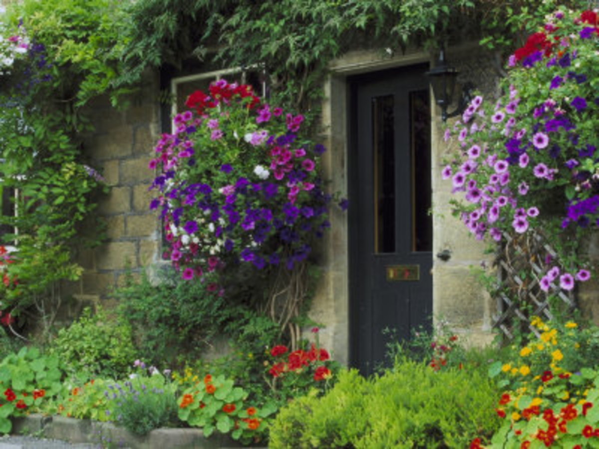 An English Cottage Garden Isn't For Everybody