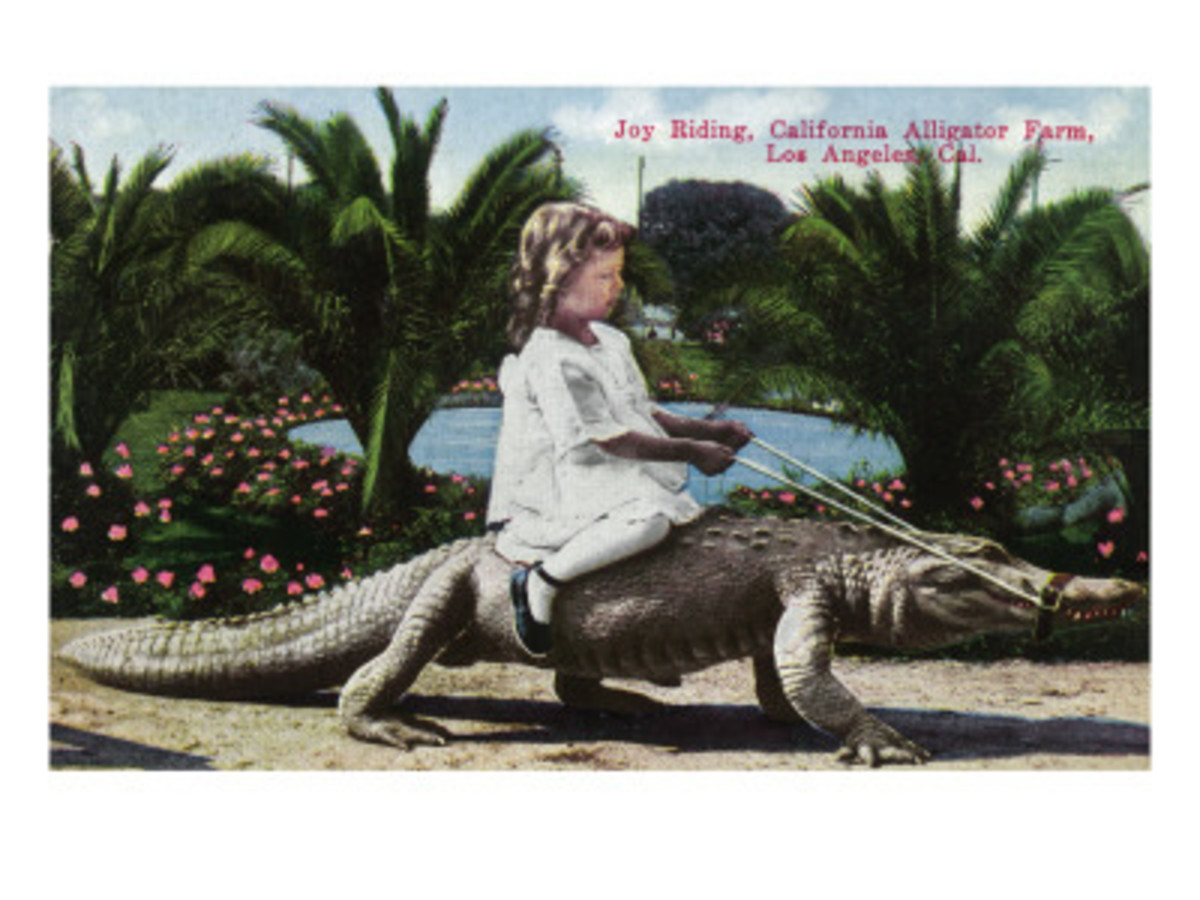 Los Angeles, California - Girl Riding Alligator at the Farm