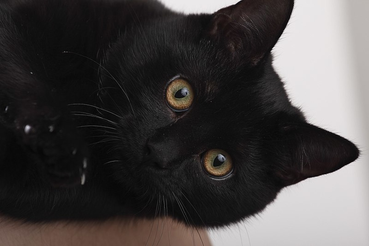 Black cats are the most mysterious cats.