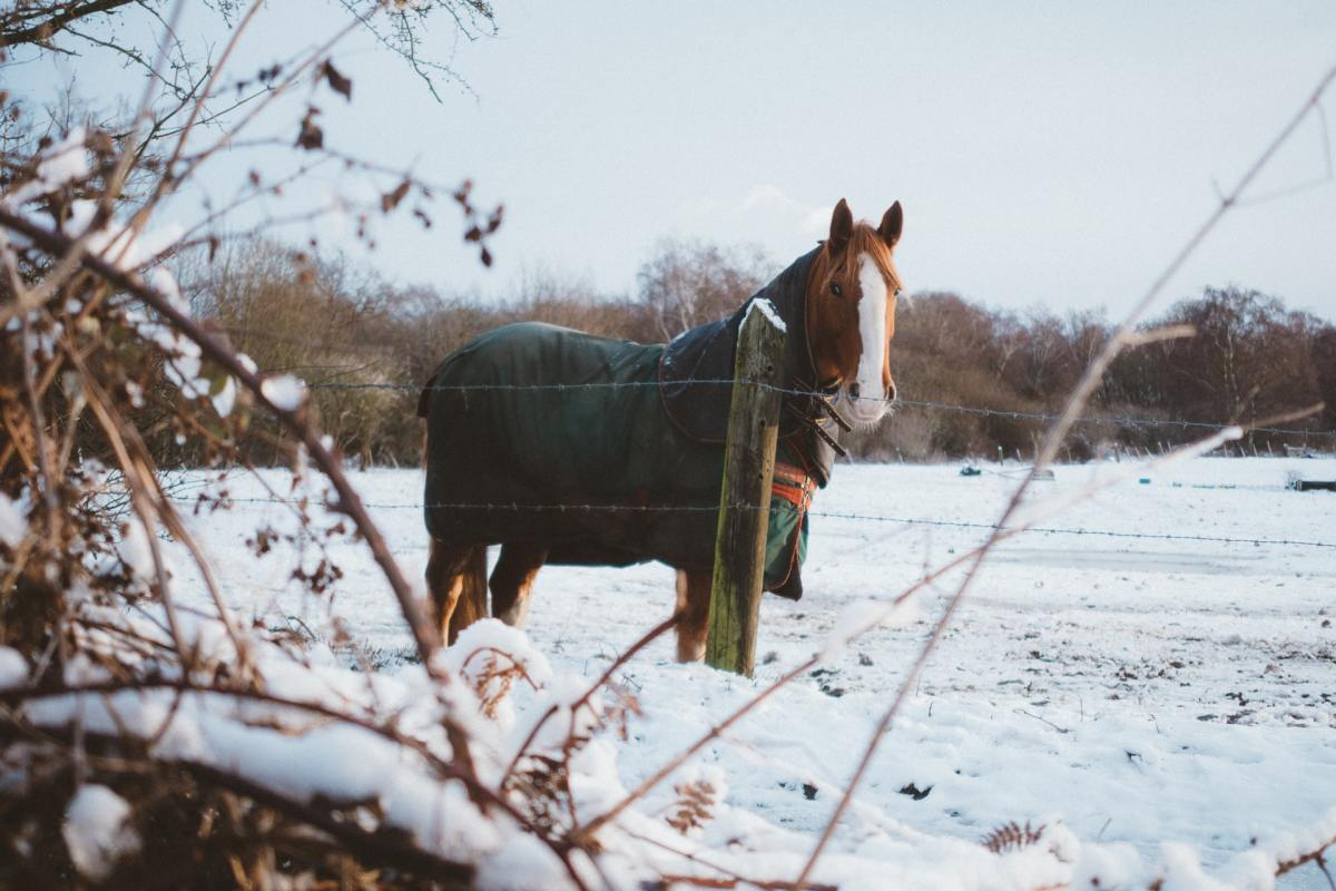 horse with a blanket in winter