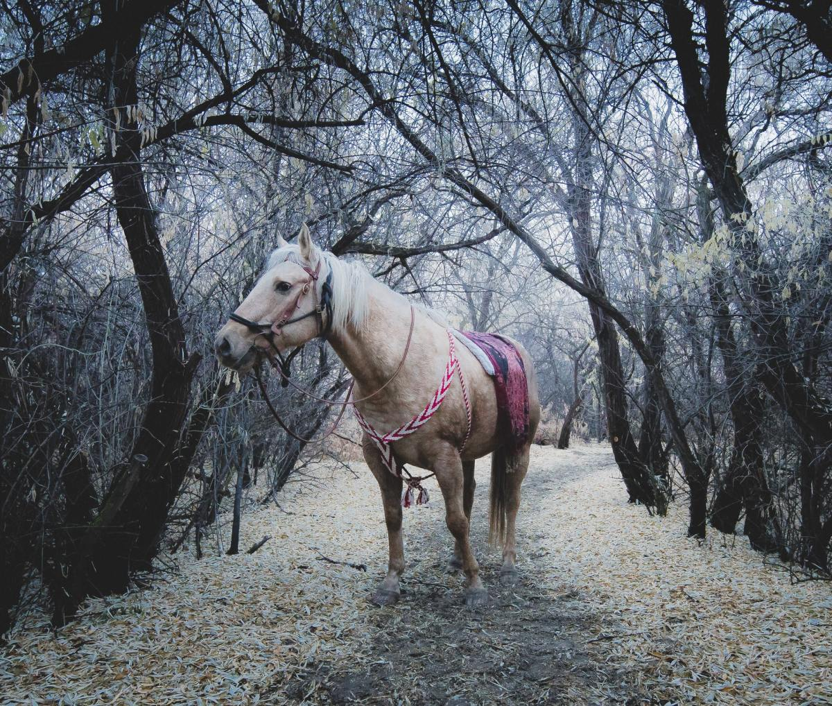 white horse is standing on the trail