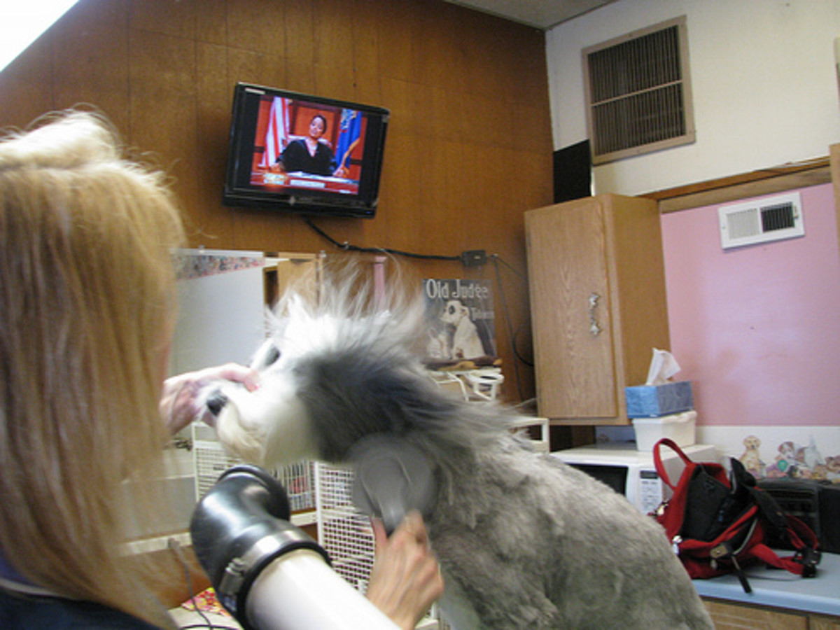 Blow drying is the quickest way to dry a dog.