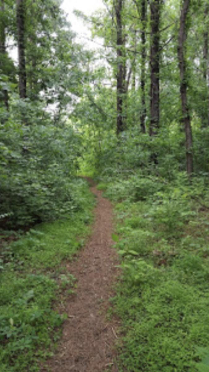 Green Hill Park, Salem Virginia trail.