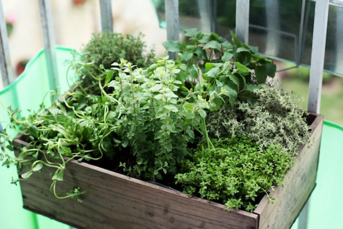 4-cottagecore-herbs-every-gardener-and-cook-needs