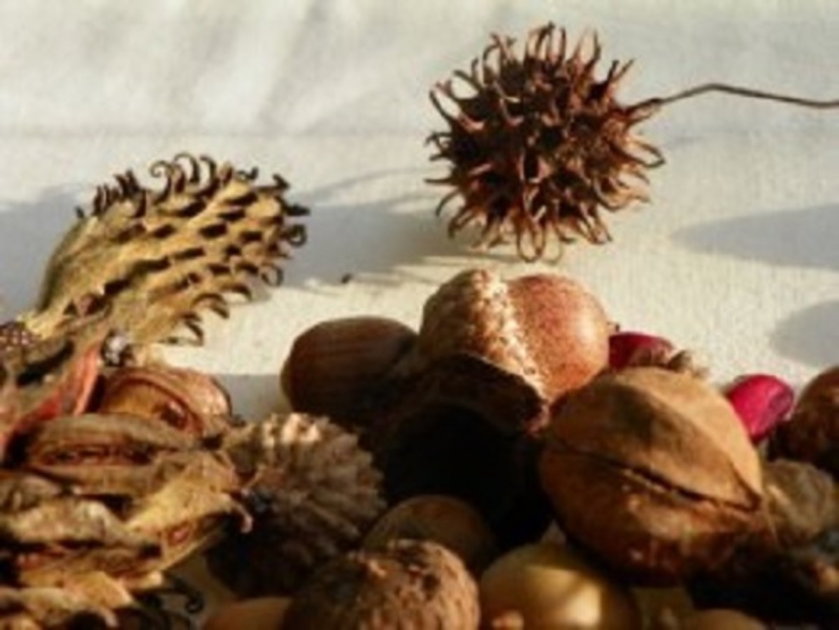 Fall Decorating Ideas Using Acorns, Seed Pods, and Pine Cones