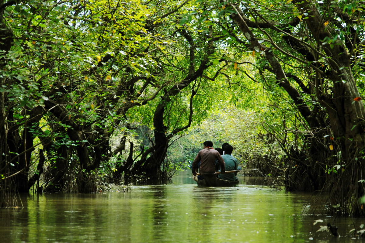ratargul-little-amazon-in-bangladesh