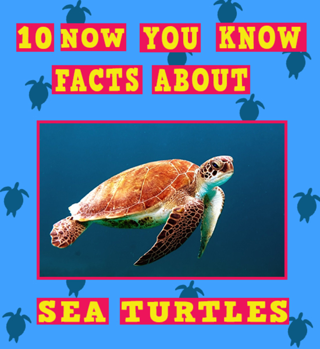 10 Facts About Sea Turtles