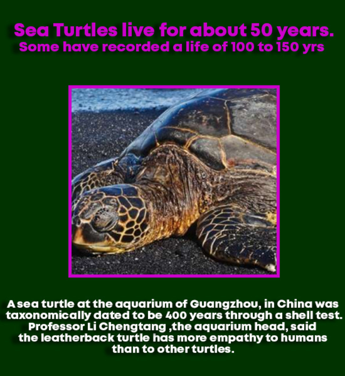 what-do-you-know-about-sea-turtles
