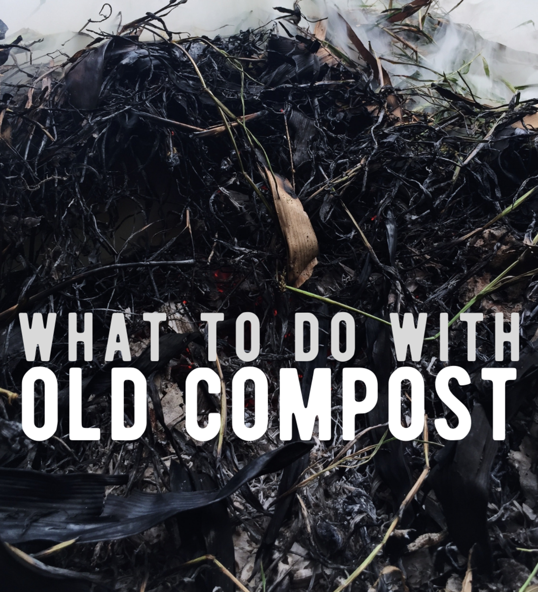 Ideas for how to use old compost.