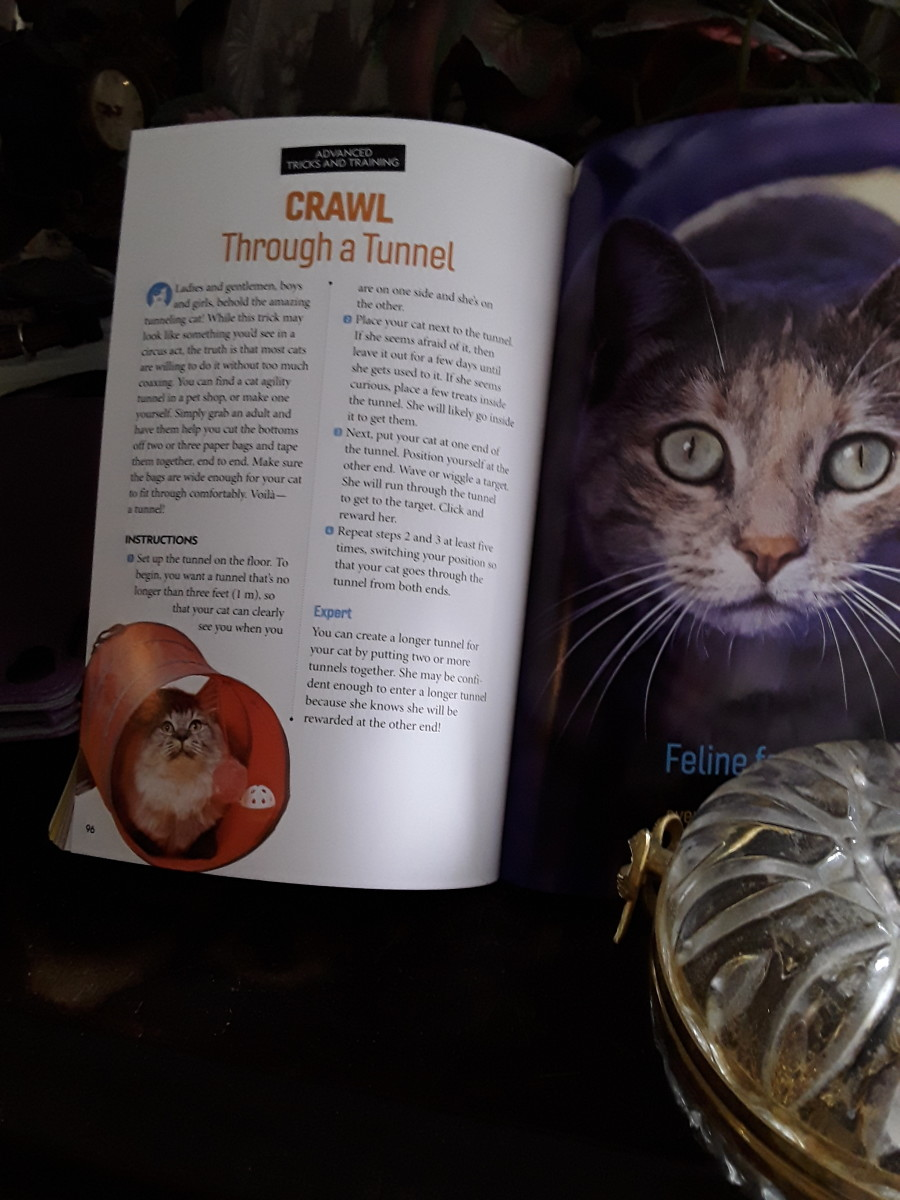 dog-and-cat-training-guides-from-national-geographic-kids-books