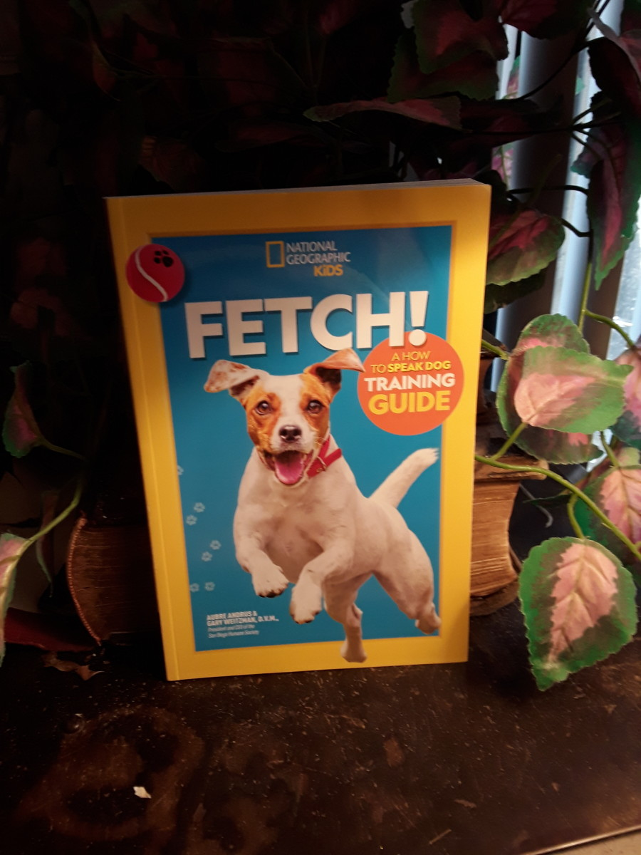 Great tool for kids to learn to train their dog