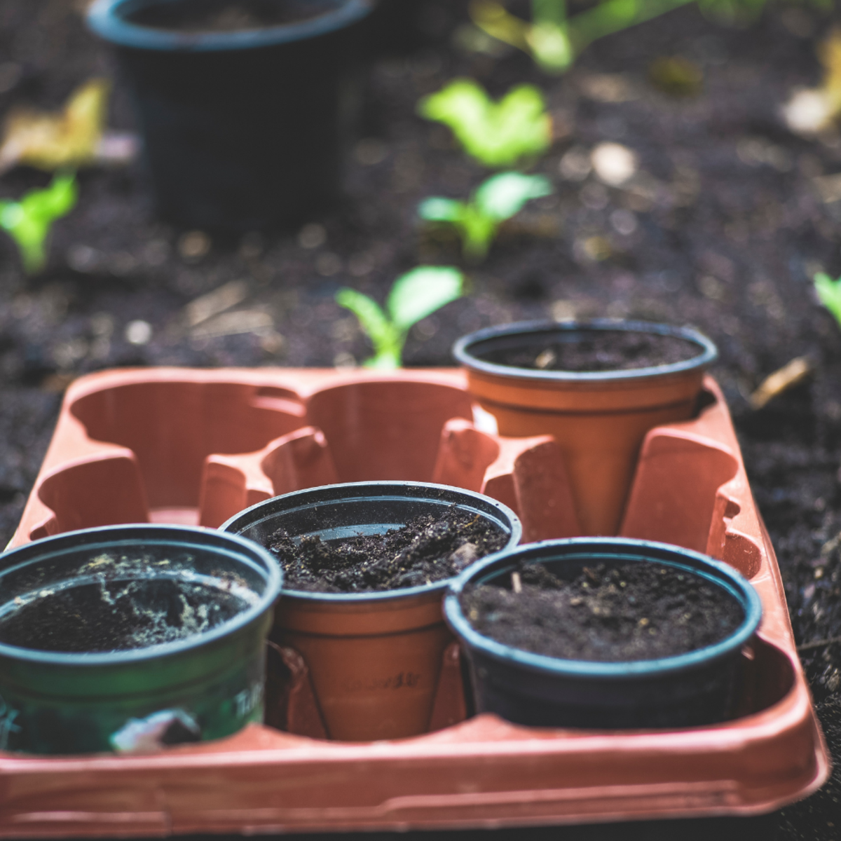 Here's how you can re-use old compost left in containers or bags.