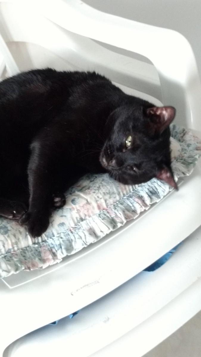 Presenting Libby: A Feline Extraordinaire