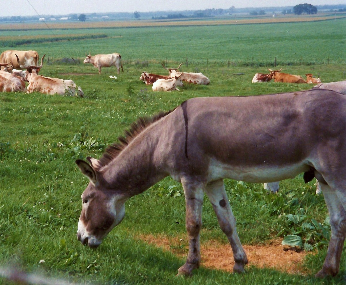 Animals grazing in the surrounding prairie