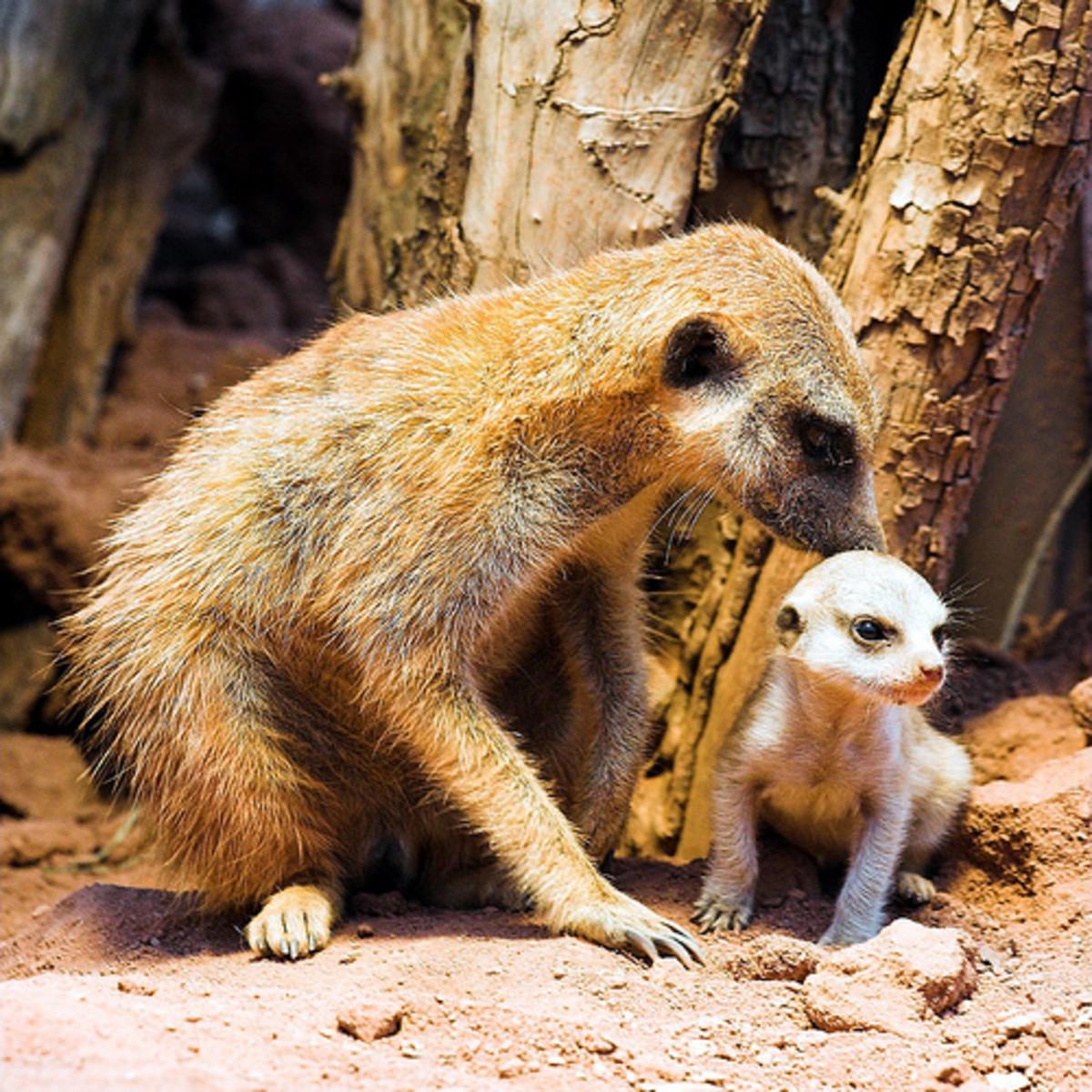 Zoos and Euthanasia