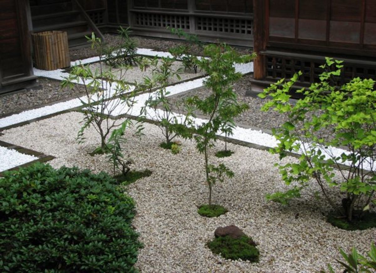 A courtyard garden, summer at Tamozawa.