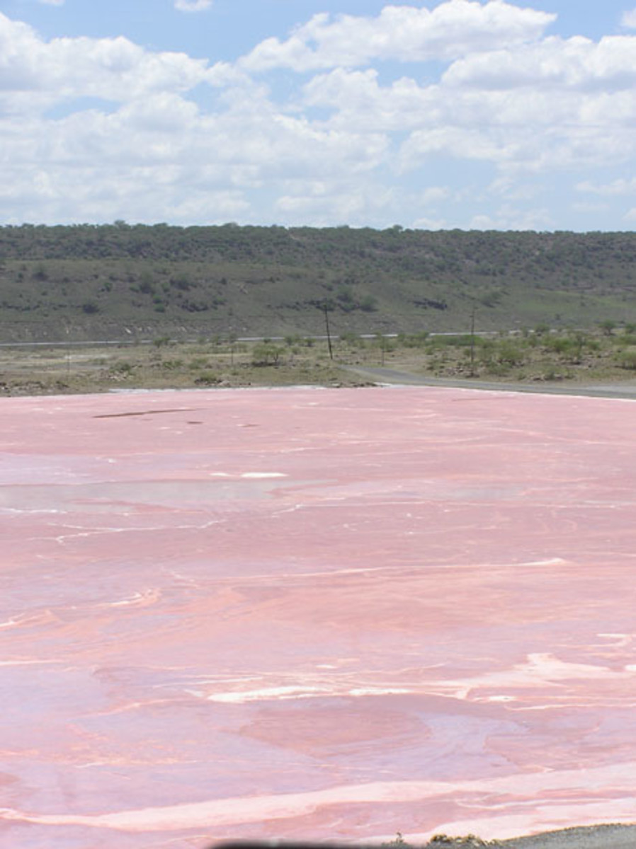 Lake Magadi is located in Kenya. The lake is a refuge for flamingos and is mined for sodium carbonate, or washing soda.