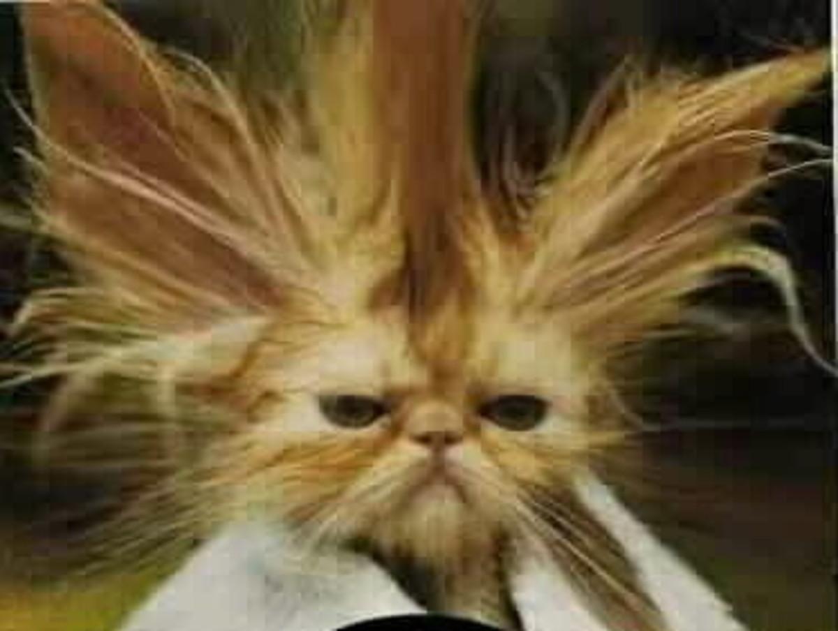 funny dry hair