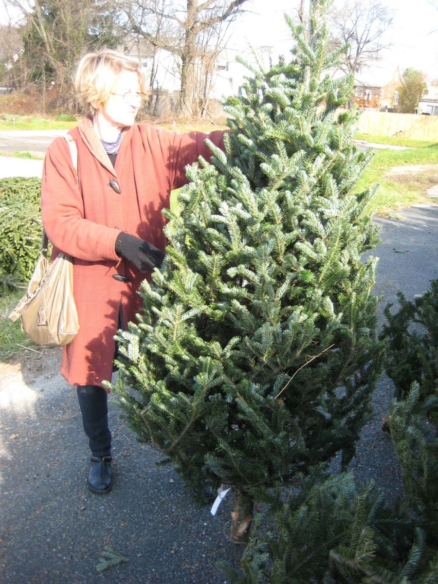 Check out several trees for the right size and weight; a heavier tree is fresh!