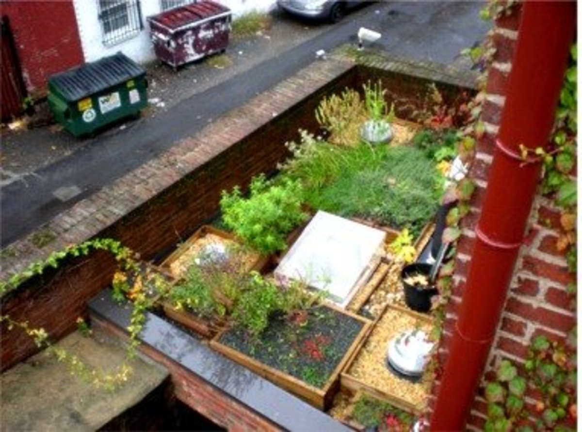 Roof Herb Garden of Tabard Inn