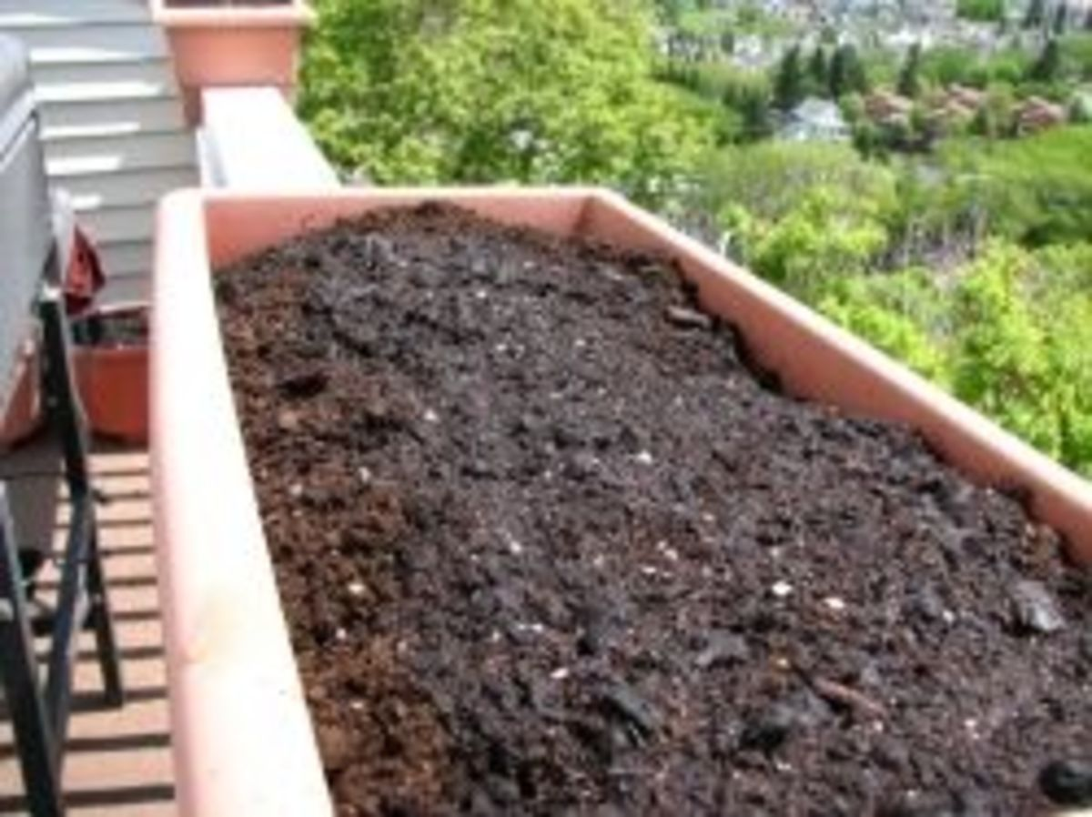 Preparing the planters