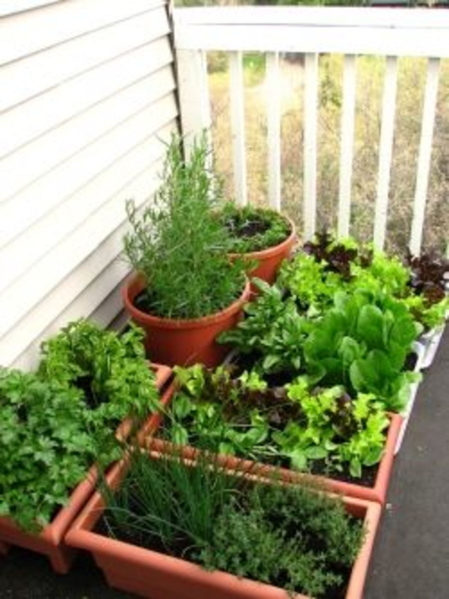 Your balcony garden dengarden for Balcony garden