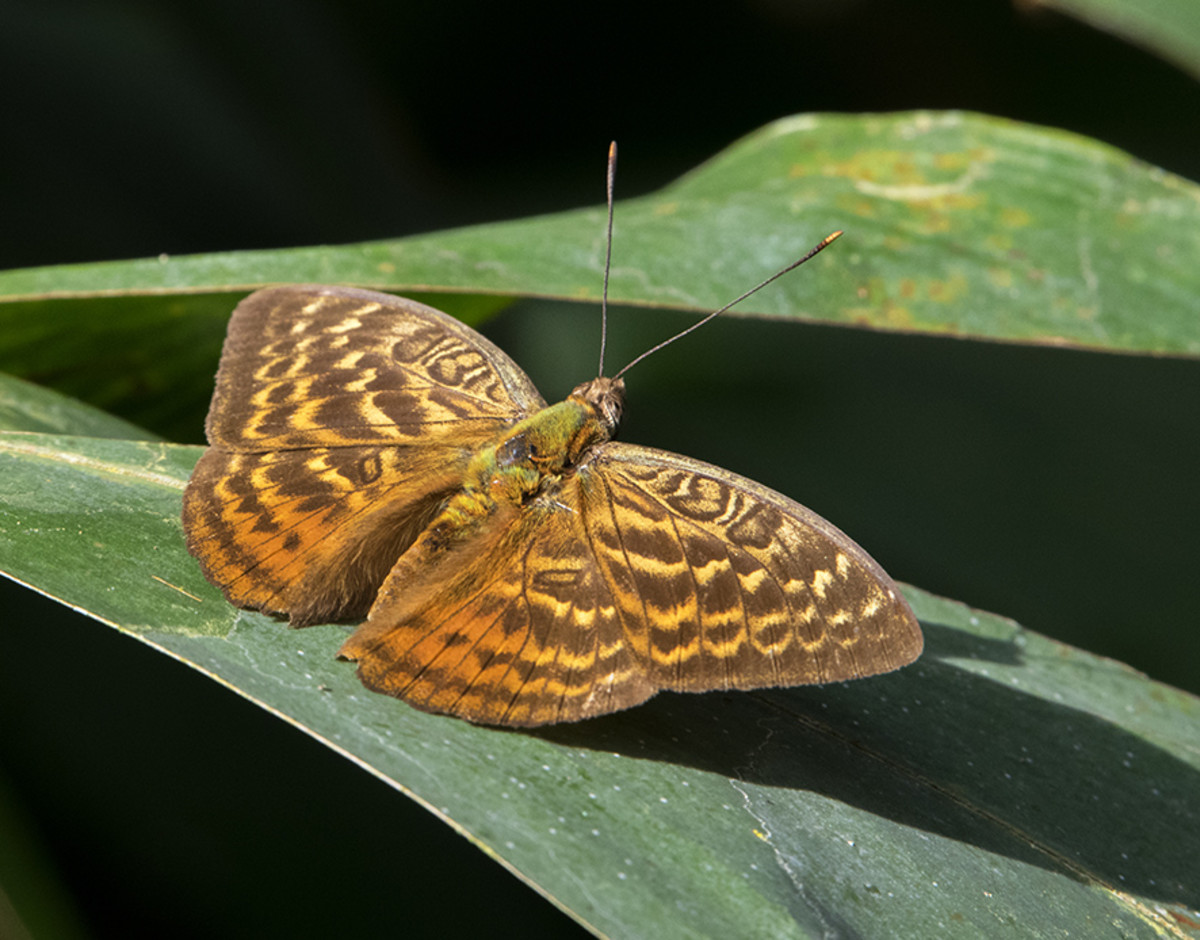 Moth on marantaceae. Photo: Matt Feierabend