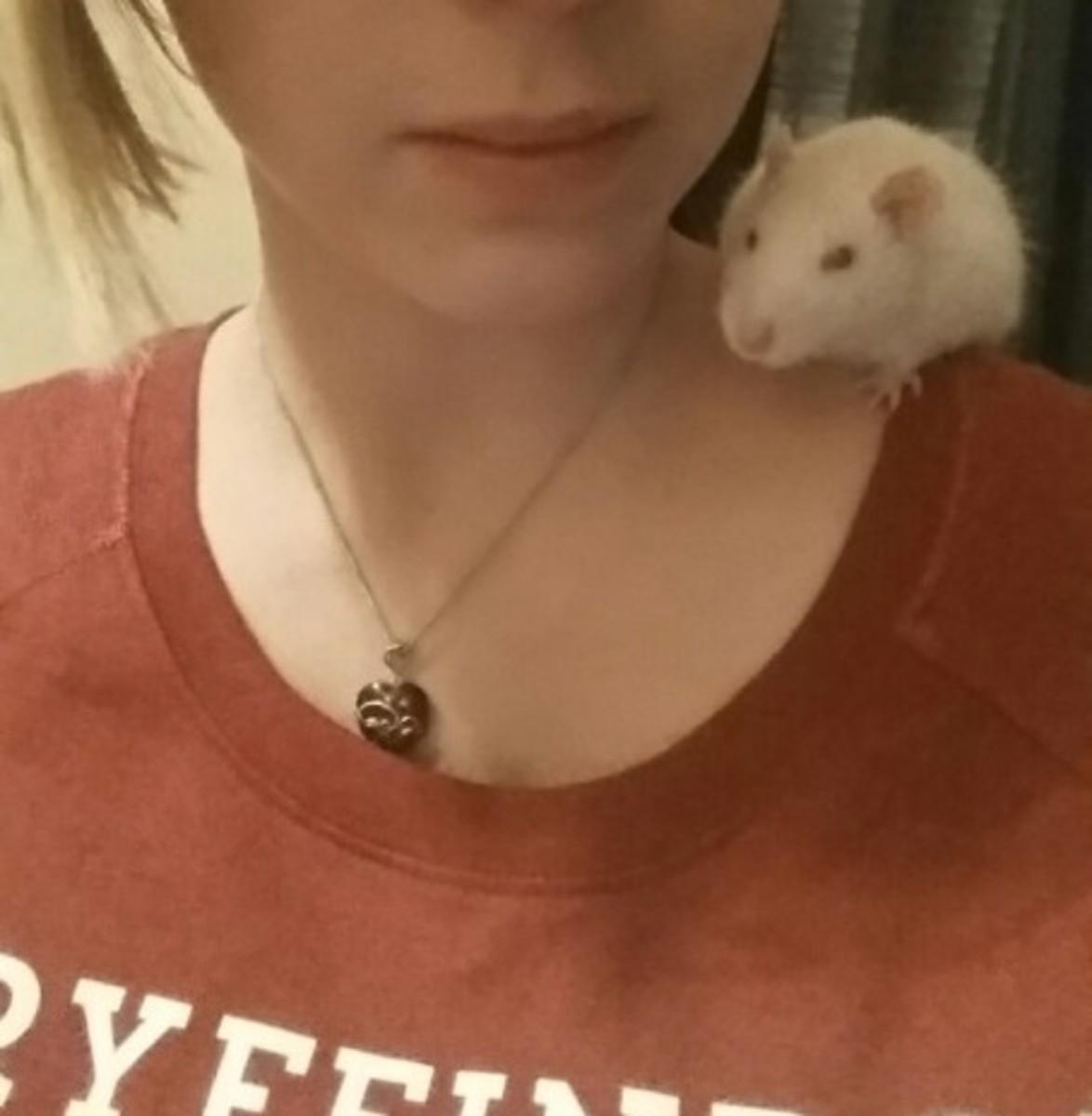 rat-parenting-101
