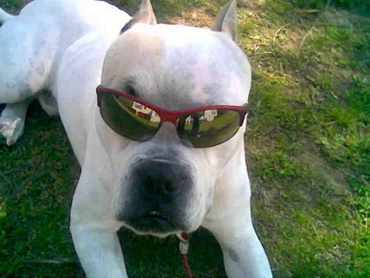 My Grand-dog Bo. Cool guy.