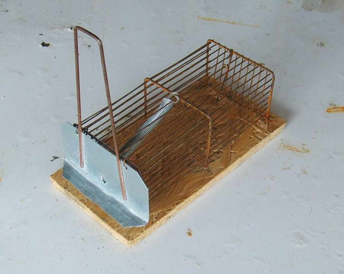 A simple catch and release trap model. Used properly, this design is much more welfare-friendly than poison traps, electric traps, glue traps, or snap traps