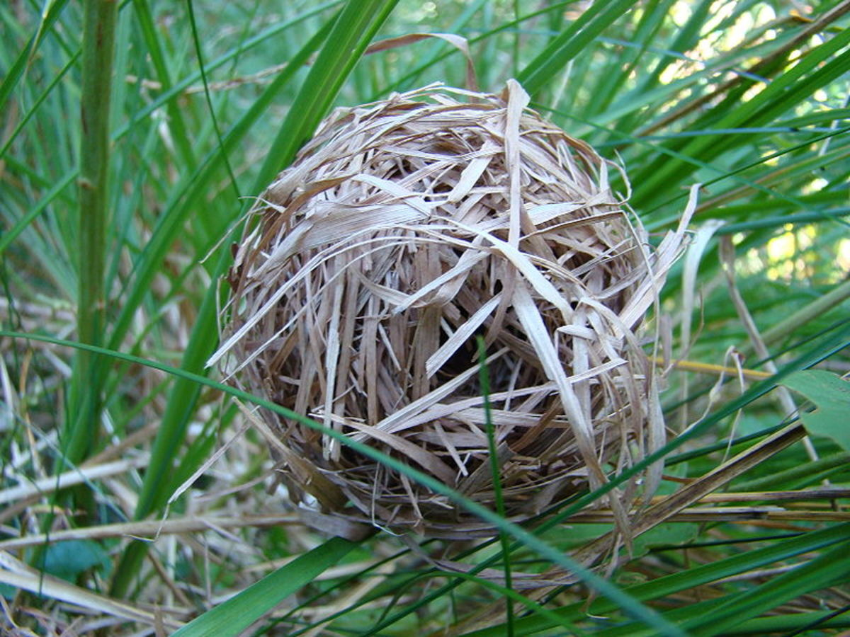 Nesting materials offer mice a sense of security and may help lower stress levels, promote healthy weight, and enhance body temperature regulation.