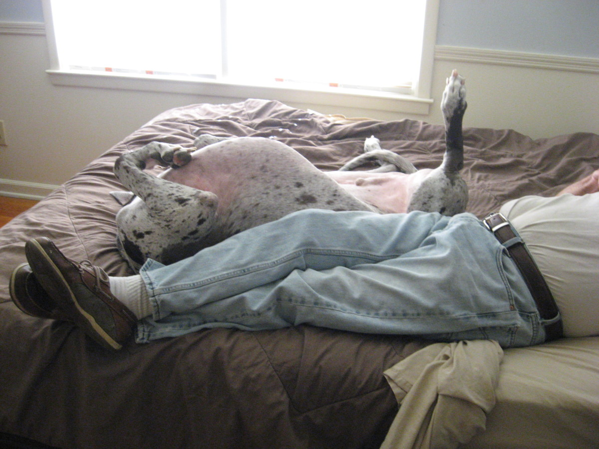 Most really large dogs are super laid back.