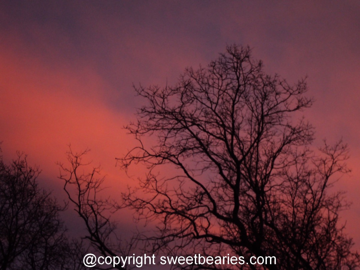 Sunset photographs with the black silhouettes of trees have inspired many of my drawings.