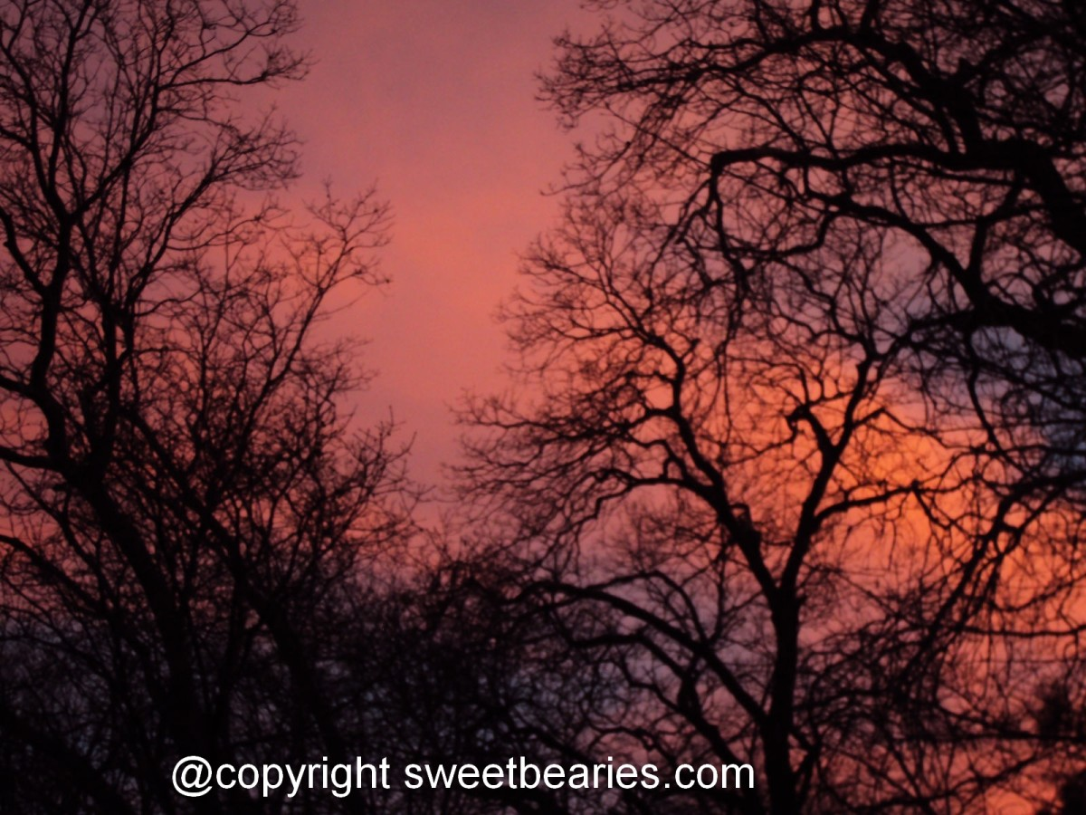 The textures of the trees in this sunset photograph were also of inspiration.