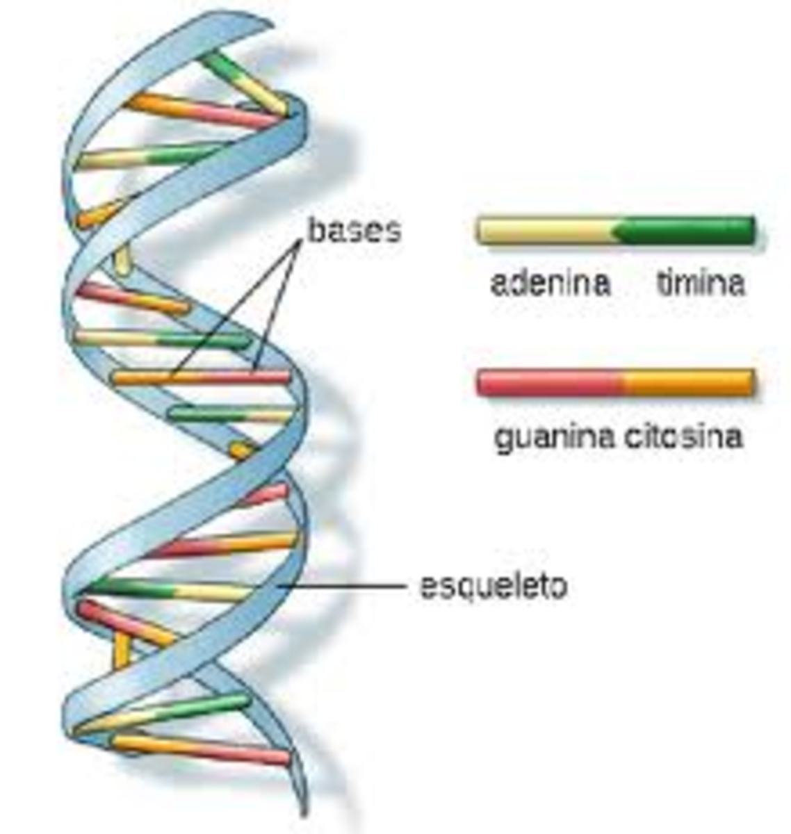DNA maybe the greatest example of an advanced algorithm known to mankind.