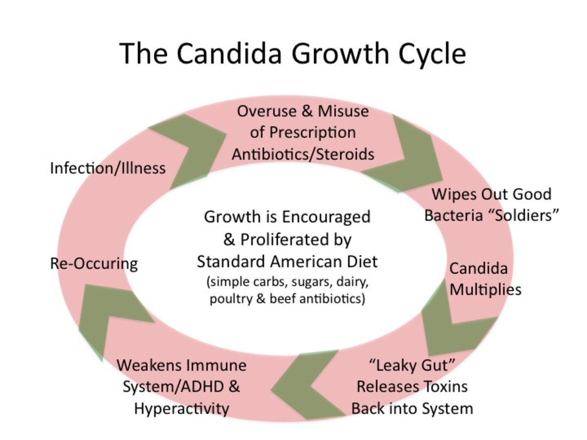 The Candida Growth Cycle
