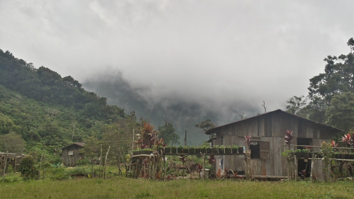 Thick fog at Mt. Malindang with temperatures starting at 16C