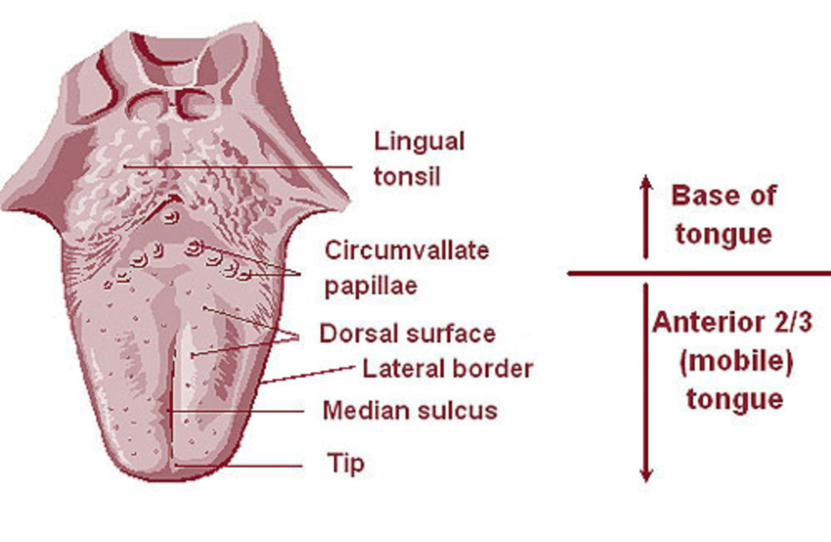 tonsilloliths-identifying-and-treating-tonsil-stones