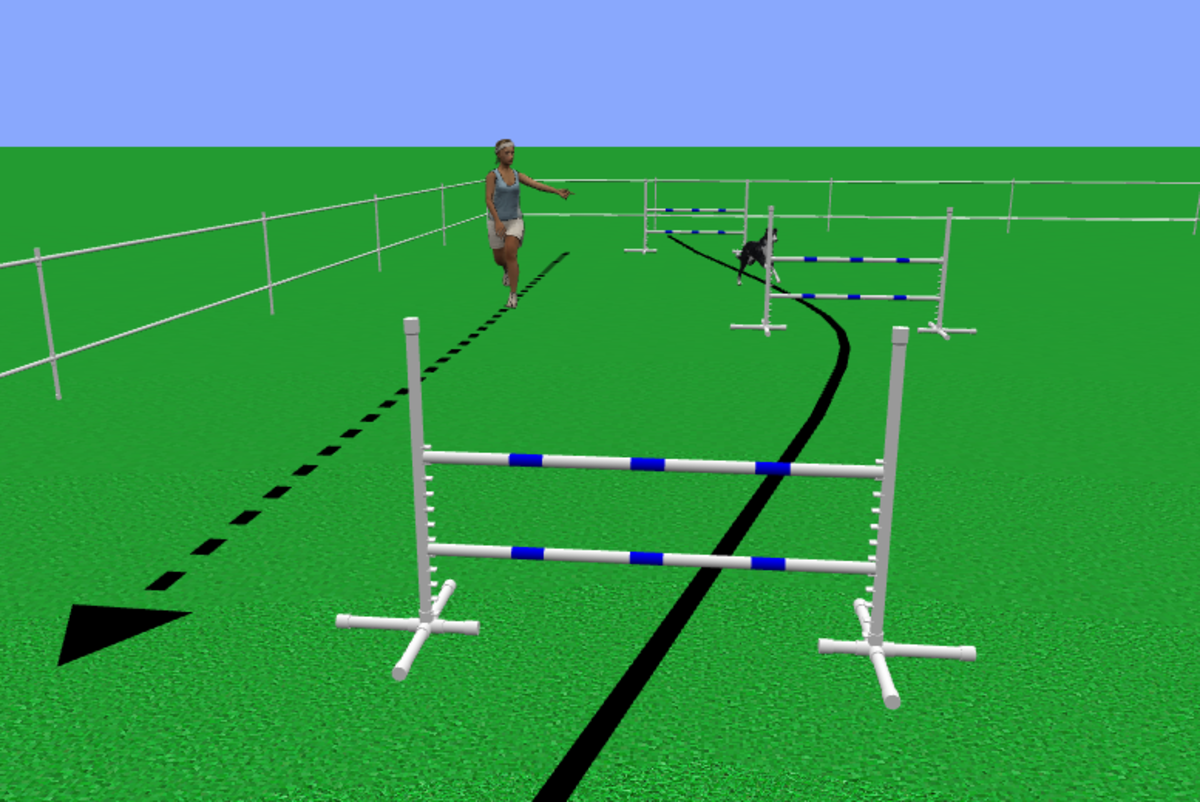 how-to-train-the-out-directional-in-agility-part-two-in-the-distance-series