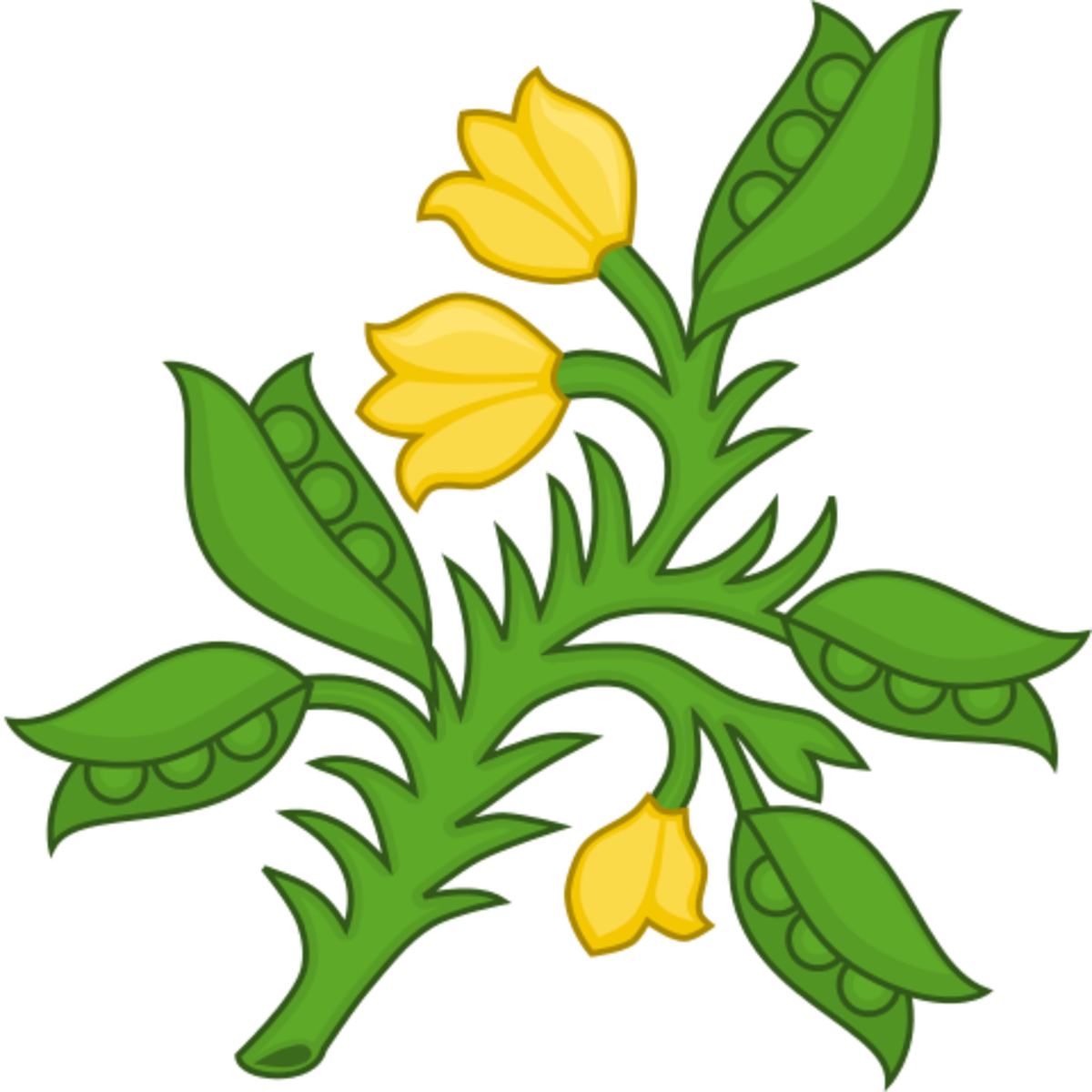 Planta genista Badge of the Plantagenets.  Attribution: Sodacan.