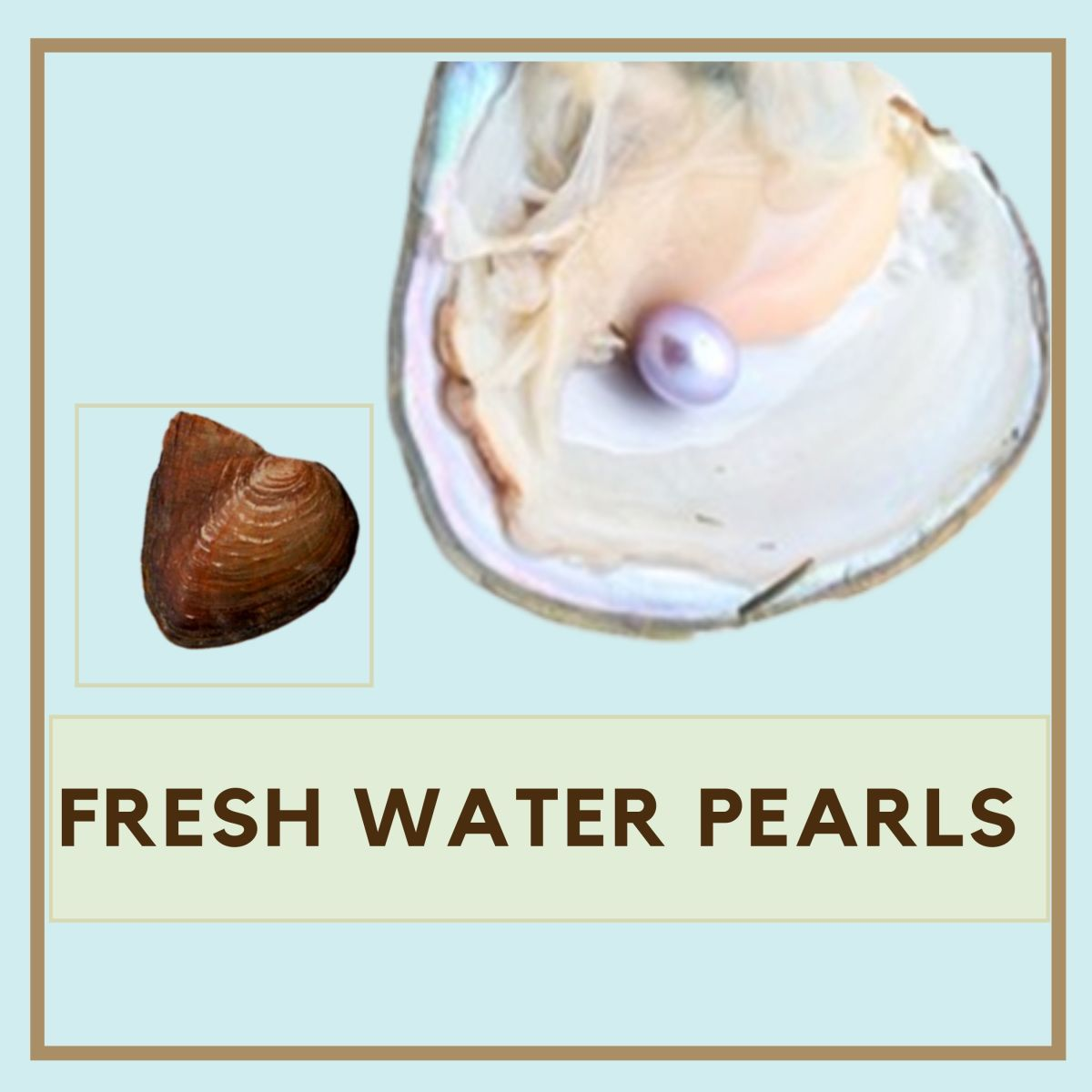 Freshwater pearls are cheaper and more widely available than their saltwater counterparts.