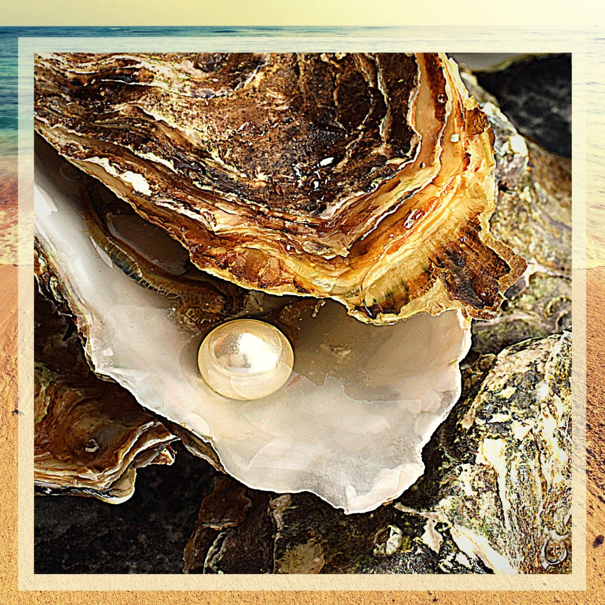 Did you know that most of the pearls used in jewelry are cultivated specifically for that purpose?