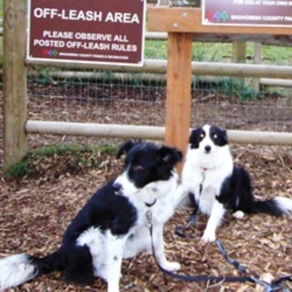 Cavalero Hill Dog Park - Snohomish County Dog Parks
