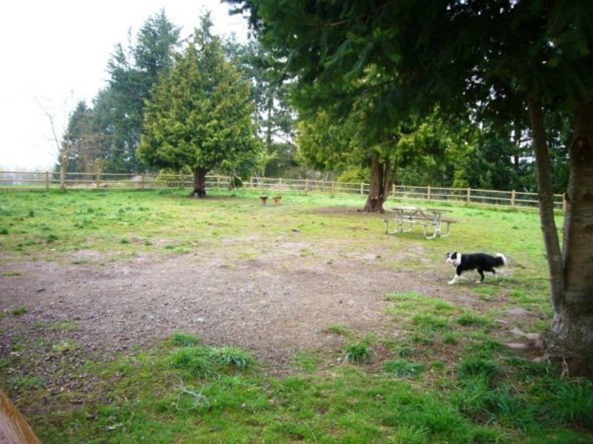 cavalero-hill-snohomish-county-dog-park