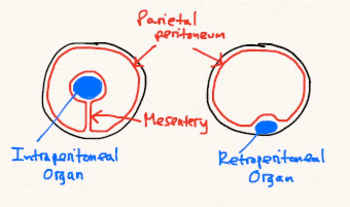 human-anatomy-lesson-9