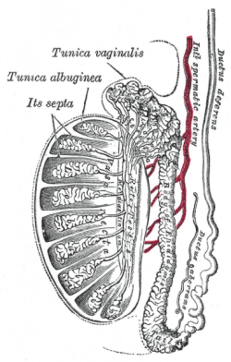 human-anatomy-lesson-12