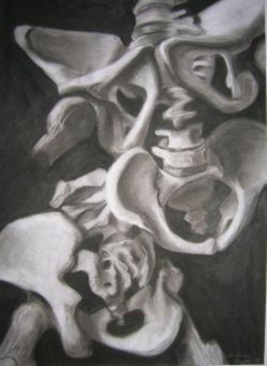 Human Anatomy Lesson 11